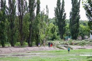 Újabb fák a nagyformátumú Városépítő útjában
