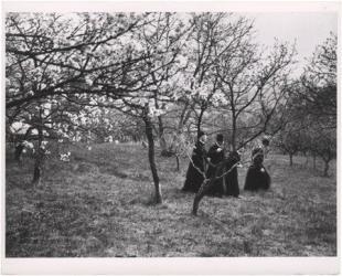 Papok a kertjükben. Esztergom, 1918. április
