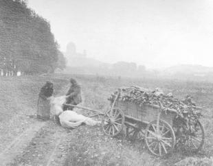 Elesett ló. Esztergom, 1916. november