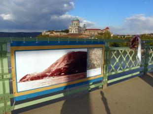 2011-10-14 A Danubius Fluvius Pictorum című kiállítás a híd korlátjaira szerelve