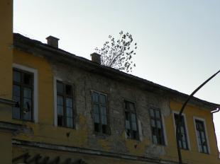 2011-11-09 Itt az ősz, hullanak a falevelek - A műemléki Fürdő Szálló tetejéről is