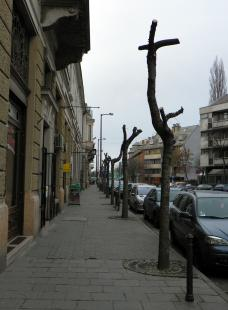 2012-02-03 Tájkép gallyazás után