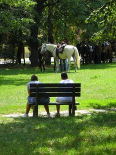 2012-08-09 Lovak pihennek a Bem József parkban
