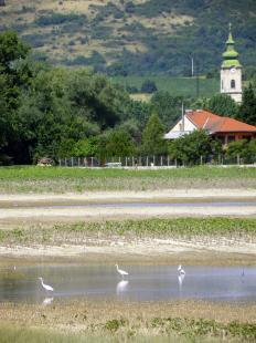 Belvízi élővilág Basaharcon