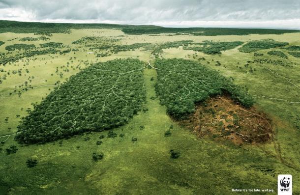 A környezet védelmére oktattak fiatalokat