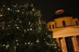 2015-12-17 Karácsonyfa a körforgalomnál