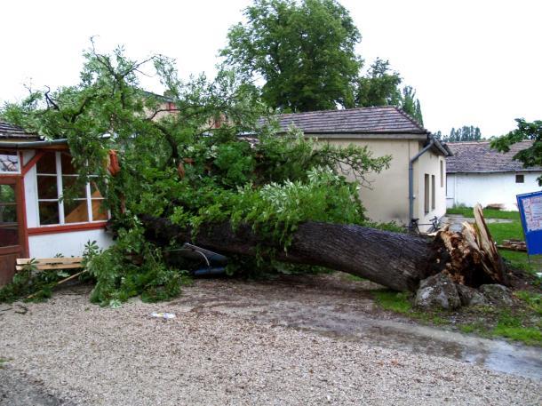100 éves fa dőlt ki a viharban