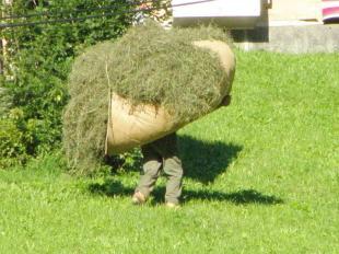 svájci farmer